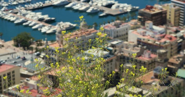 Alicante ciekawsze niż myślisz