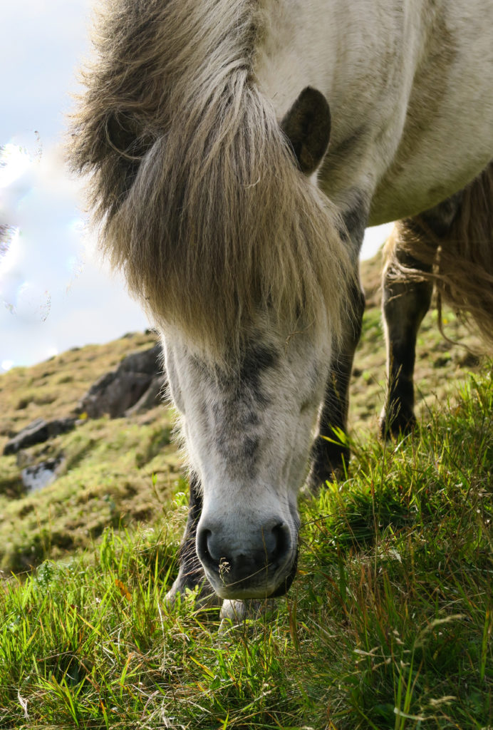 Fotorelacja z Islandii- jednej wyspy, wielu światów