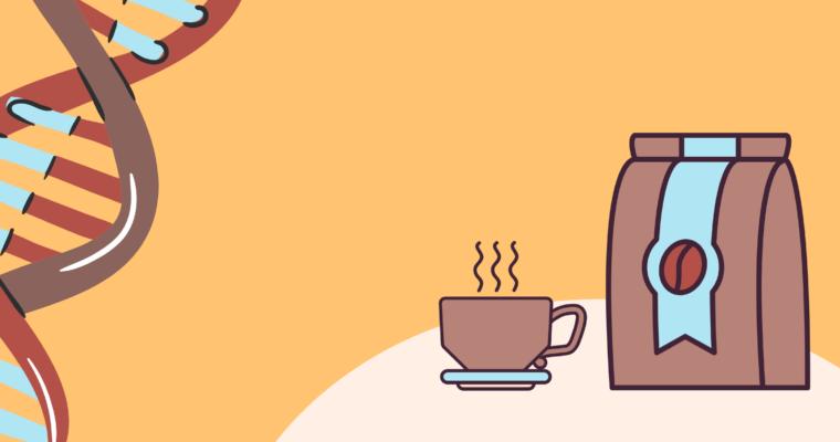 W jaki sposób kawa nas pobudza?